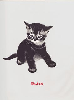 Butch [from April's Kittens by Clare Turlay Newberry]
