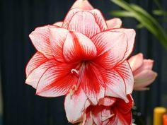 flores colombia - Buscar con Google