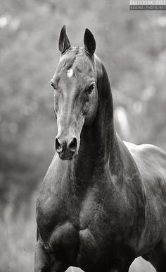 """""""Horses look weird without their manes.."""" NO THEY DONT THEY STILL LOOK MAJESTIC~Isabelle"""