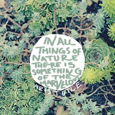 Aristotle Nature Quote - Photo Art Print - Succulents Green - Philosophy Quote Typography - Choose Your Size on Etsy, $24.00