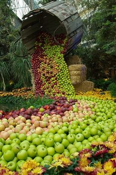 An apple harvest flowing like a river !