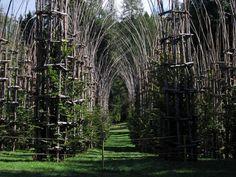 La cattedrale vegetale, Mauri @ Arte Sella