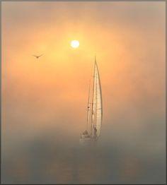 The fog by Vadim Trunov