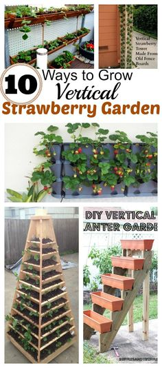 10 DIY Vertical Container Strawberry Planters Strawberries can be easily grown in containers and various flower pots. In the post, we are going to present 10 DIY Ways to grow vertical strawberry garden. Strawberry Planters Diy, Strawberry Garden, Strawberry Plants, Growing Plants, Growing Vegetables, Growing Strawberries In Containers, Vertical Vegetable Gardens, Vertical Garden Planters, Vegetable Gardening