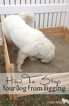 How to stop your dog from digging up your yard by creating a digging box!