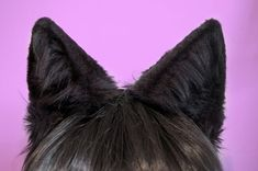 Hey, I found this really awesome Etsy listing at https://www.etsy.com/listing/153861100/black-faux-fur-wolf-or-large-cat-ears