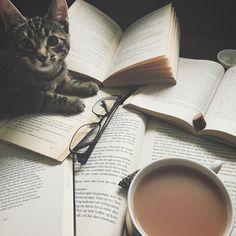 Cosy study companion cat and books