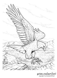 ColoringBald Eagle Coloring Pages Bald