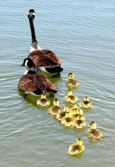 Isn't this the cutest family?