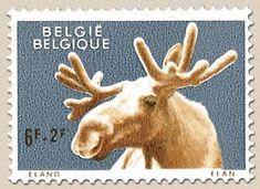 belgian stamps Zoo of Antwerp. Eland
