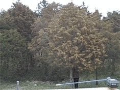 Tree Full of Pollen. this is my nightmare.