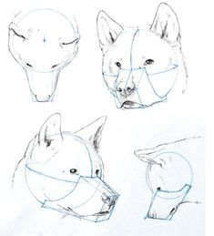Image result for dog tutorial drawing