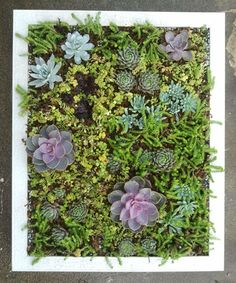 Xeriscape Ninjas: DIY Tutorial: Succulent Frame for Vertical Display!