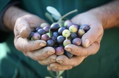 organic olive oil buying guide