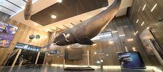 Museu da Baleia. Caniçal. Madeira.