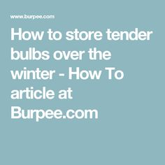 How to store tender bulbs over the winter - How To article at Burpee.com