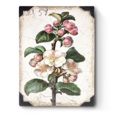 Apple Blossom Sid Dickens Tegel Spring 2019 The Transformation Collection Tile No: Apple Blossom Blooms of grandeur transforming into fruit, representing the beauty and bounty of