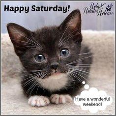 Happy Saturday! Have a wonderful weekend! #thursday happy saturday saturday quotes kitten cat