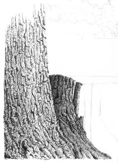 drawing trees, free art instruction, pen and ink lesson