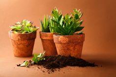 plantas dentro de la casa yzwo (3)