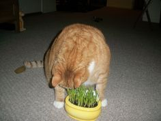 Tiggy loves his x-mas present.