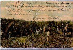 TARJETA POSTAL CUBA, CORTE DE CAÑA (Postales - Postales Extranjero - América - Cuba)