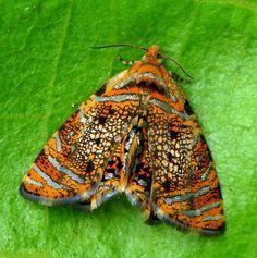Borboletas,Mariposas,Lagartas(lepidoptera) - Comunidade - Google+