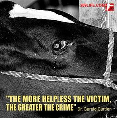 Animals are the most innocent beings and the last that deserve the kind of treatment a lot of them get
