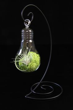 Lightbulb Terrarium with Airplant and Moss on Black Metal Tabletop Stand