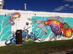 Binho in Rochester, NYC