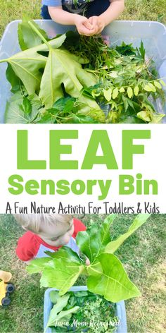 Leaf Sensory Play For Toddlers A fun nature sensory bin with leaves for toddlers and preschool kids. A good outdoor or indoor toddler activity to do after a nature walk with 1 year olds, 2 year olds, 3 year olds, and preschoolers! Activities For 1 Year Olds, Eyfs Activities, Sensory Activities Toddlers, Activities For Adults, Nature Activities, Preschool Learning Activities, Spring Activities, Infant Activities, Toddler Sensory Bins