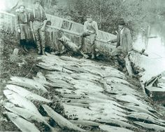 Just a day of salmon fishing on The Little Nestucca River, near Pacific City and Cloverdale, in Oregon. Circa 1906 *. I have probably heard the words Little Nestucca hundreds of times in my life.