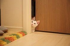 Kedi Duruş ve Davranışları Hakkında PDF Kitap: http://www.kedi.mobi/2017/05/kedi-kopek-durus-ve-davranslar-pdf.html