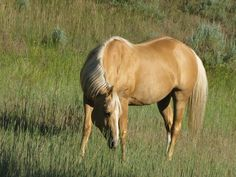 Horse Mane Colors | Horse Colours… | Straight From The Horses Mouth