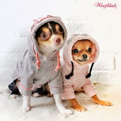 WOOFLINK - Hip designer dog clothes