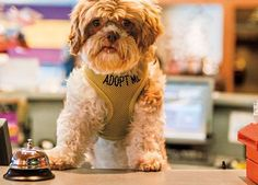 Hotel acolhe cães para adoção | SAPO Lifestyle
