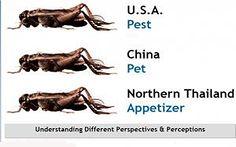 Understanding Perceptions