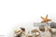 Stock Photo : Beach Sand, Starfish, and Seashells Frame Border on White Background