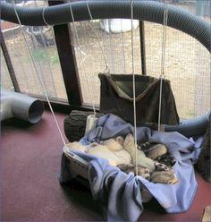 Ferret hammock in ferret run.