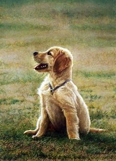This adorable golden retriever pup sits on the grass after long minutes of playing around. Sueellen Ross has portrayed A LAUGH A MINUTE to be a great puppy print. This print is available unframed in a