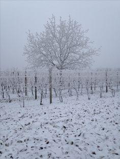 Winter  Tree  White christmas