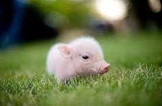 Resultado de imagen de los animales mas pequeños del mundo