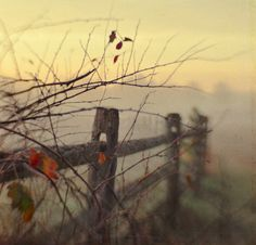 The morning fog is starting to lift. So many mornings of this, I could get lost in the fog. Samhain, Belle Photo, Autumn Leaves, Mists, Images, Painting, In This Moment, Seasons, Psalm 119