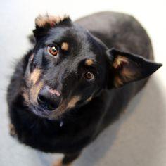 Harriet - SPCA of Texas (McKinney)