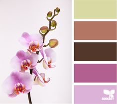 Orchid Color - http://design-seeds.com/index.php/home/entry/orchid-color
