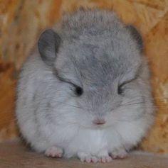 Baby fluffy.