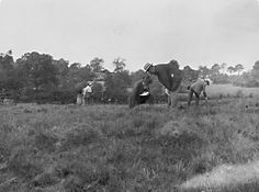 England 1911. Silverdale. Kaninchenlägerhügel (ETH-Bibliothek, Bildarchiv, Dia_282-0505)