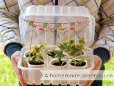 MIMOSORUM : Cómo hacer un Invernadero Casero - DIY: Make a Homemade Greenhouse