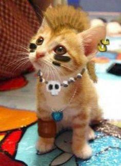 gato rambo
