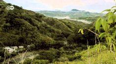 El clan de los propietarios de bosques de Emalu, en las Islas Fiyi, no pretende talar el bosque. De este modo, espera cobrar un incentivo del programa de pro...